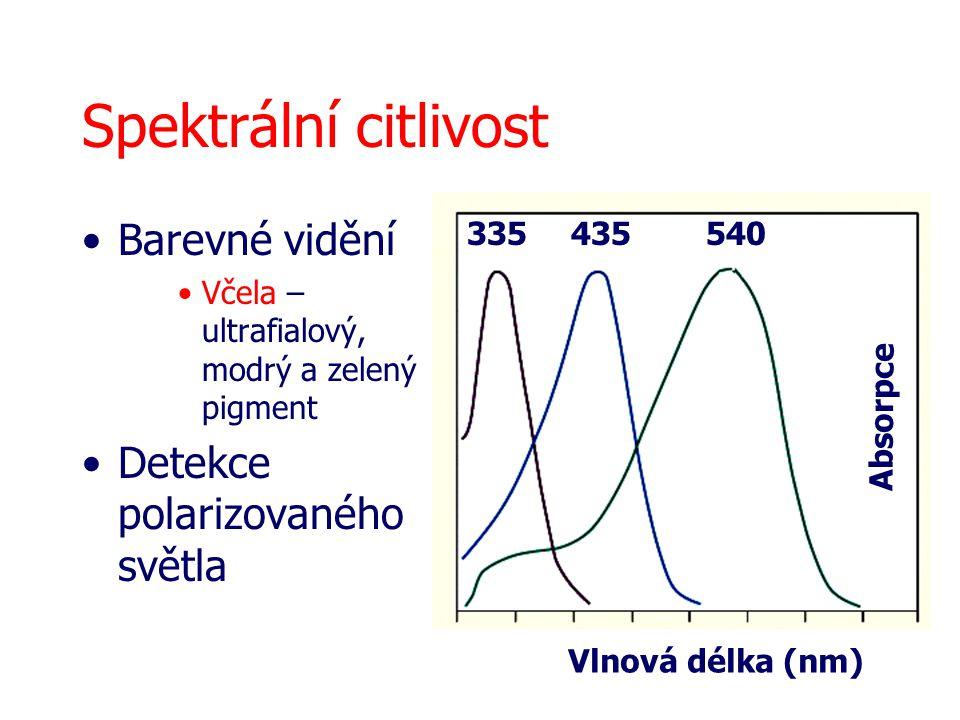 Spektrální citlivost Barevné vidění Detekce polarizovaného světla