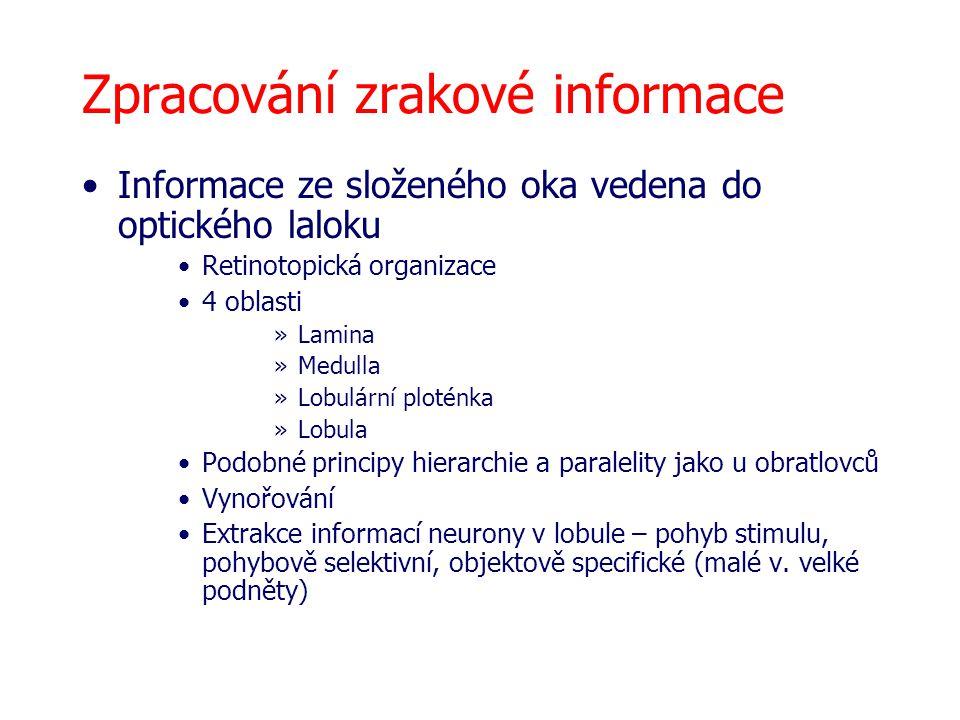 Zpracování zrakové informace