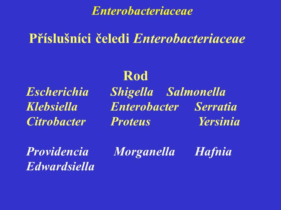 Příslušníci čeledi Enterobacteriaceae