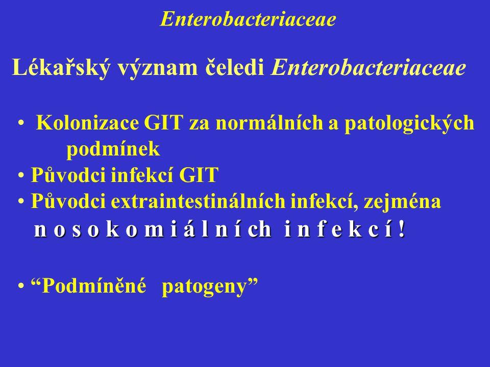 Lékařský význam čeledi Enterobacteriaceae