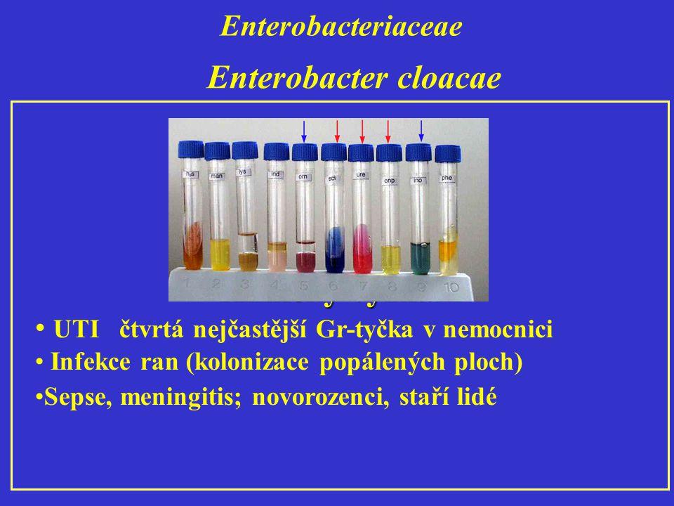 Enterobacter cloacae Klinický význam
