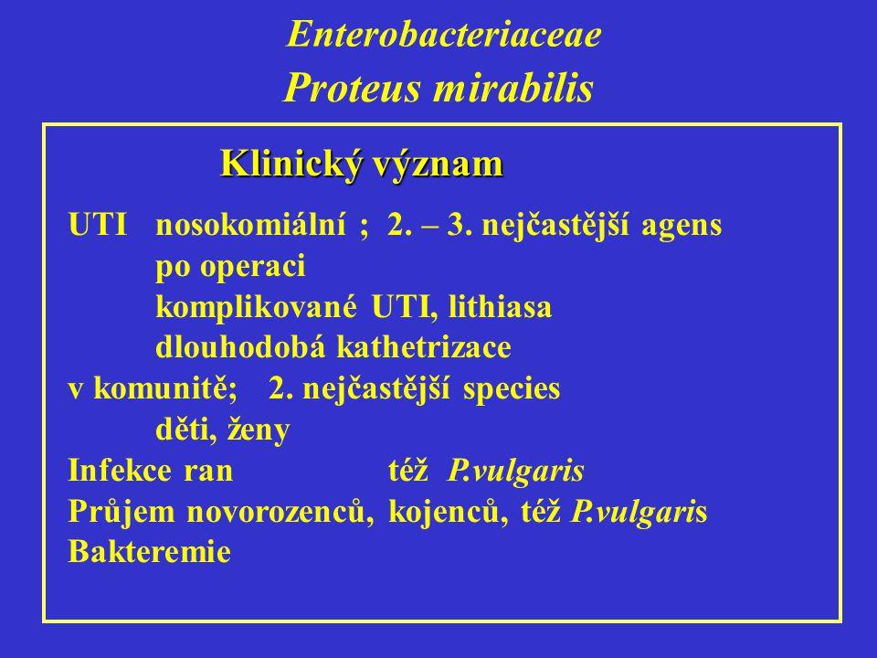Proteus mirabilis Enterobacteriaceae Klinický význam