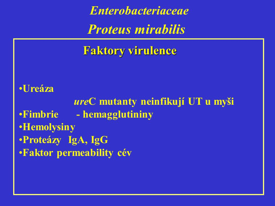 Proteus mirabilis Enterobacteriaceae Faktory virulence Ureáza