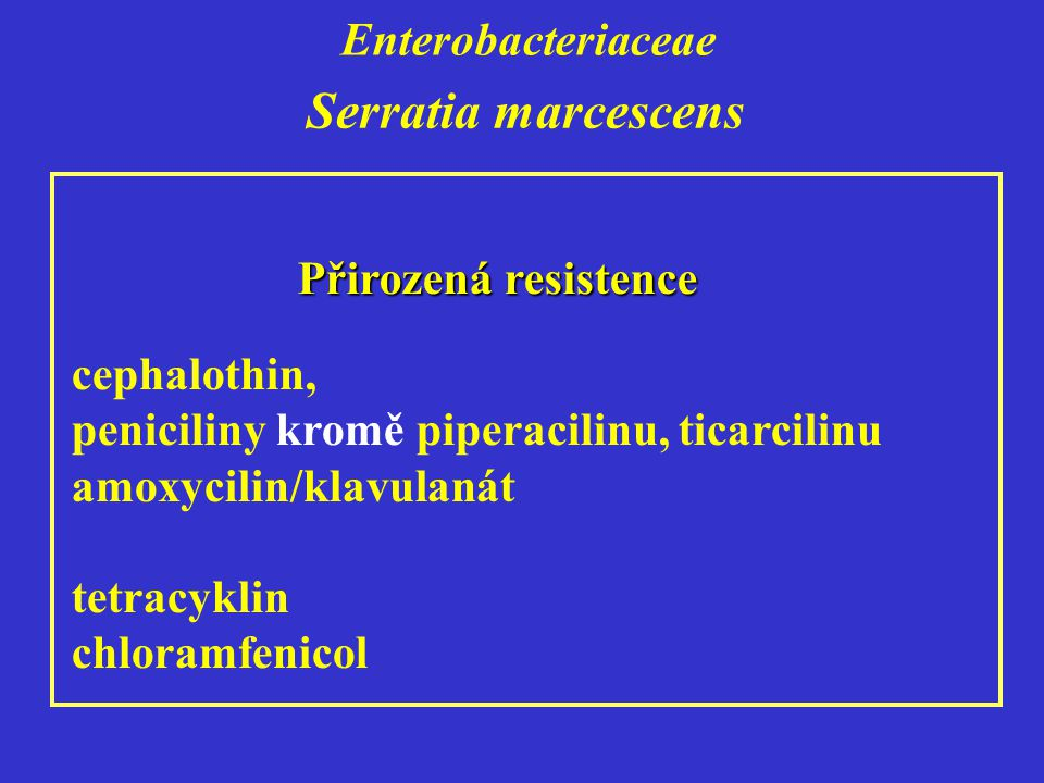 Serratia marcescens Enterobacteriaceae Přirozená resistence