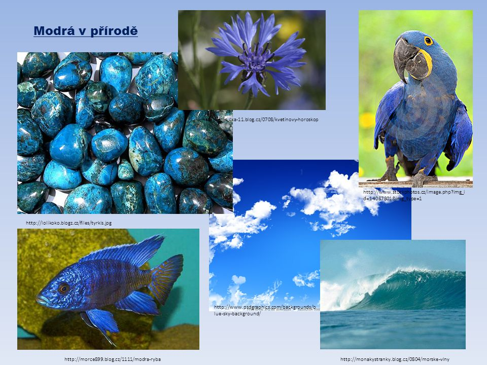 Modrá v přírodě http://mysicka-11.blog.cz/0708/kvetinovy-horoskop
