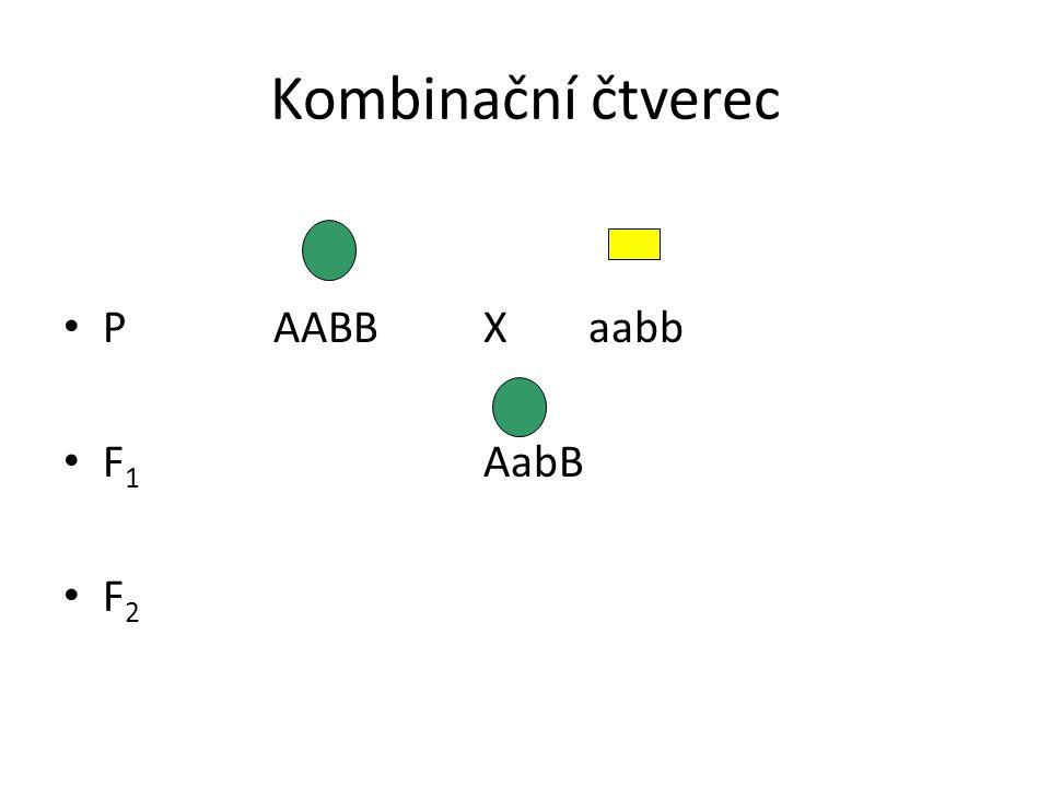 Kombinační čtverec P AABB X aabb F1 AabB F2