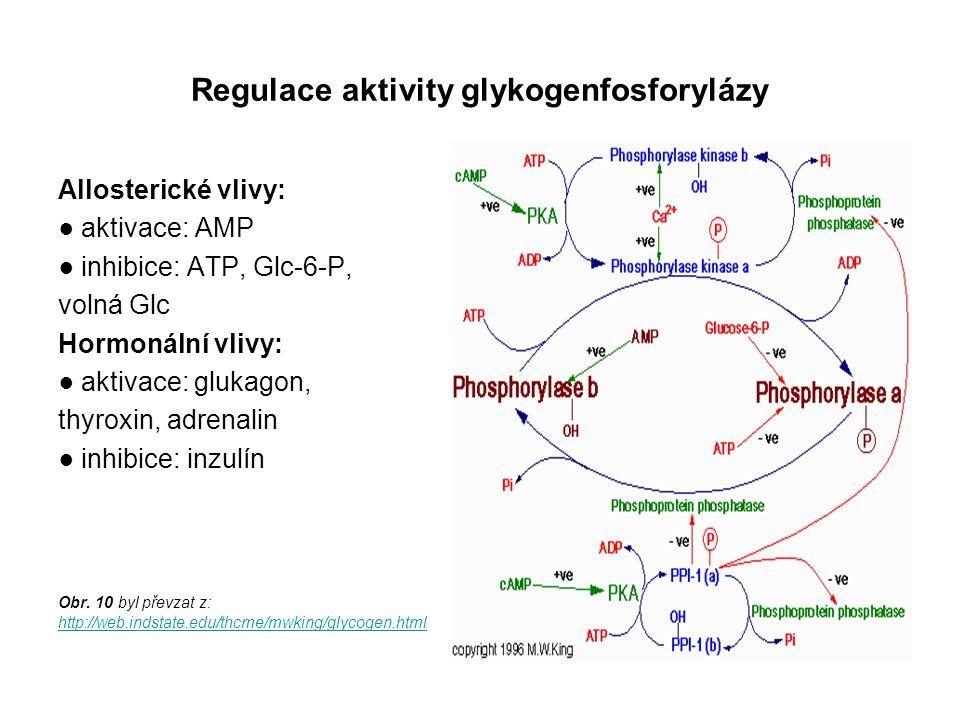 Regulace aktivity glykogenfosforylázy