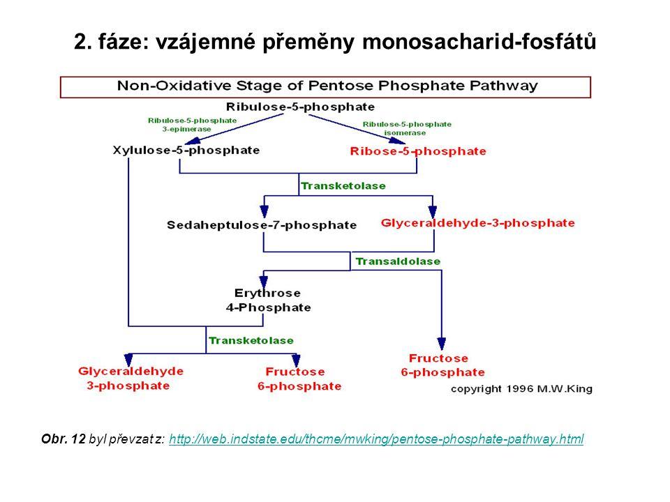 2. fáze: vzájemné přeměny monosacharid-fosfátů