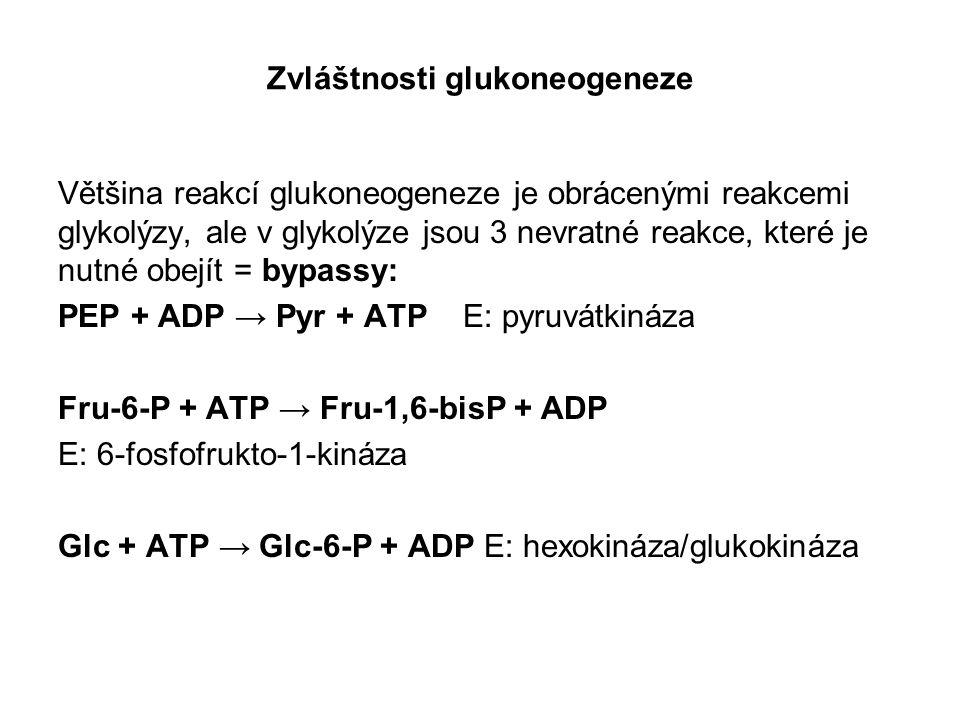 Zvláštnosti glukoneogeneze