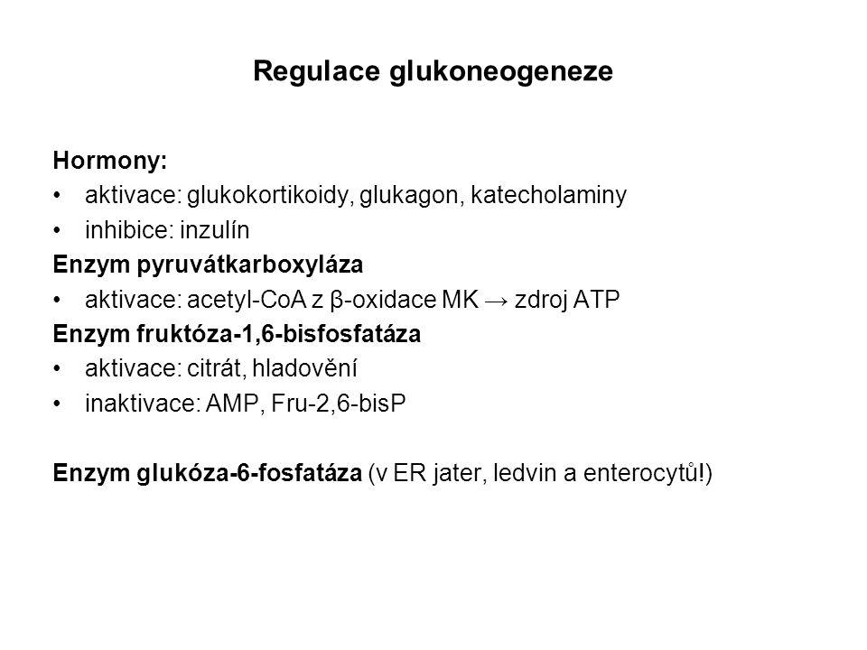 Regulace glukoneogeneze