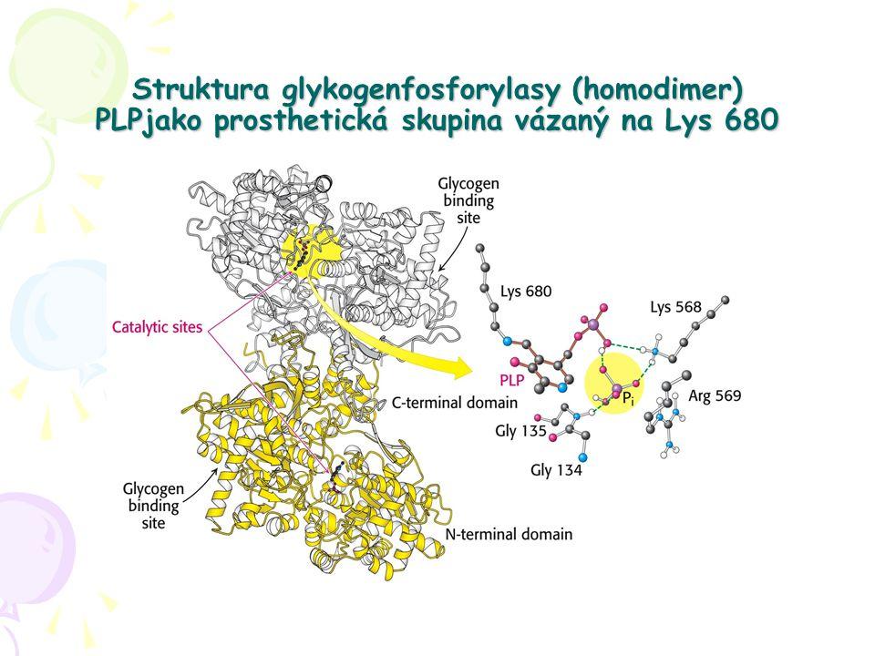 Struktura glykogenfosforylasy (homodimer) PLPjako prosthetická skupina vázaný na Lys 680
