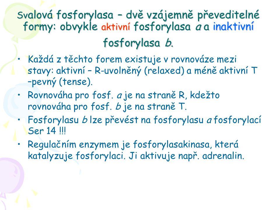 Svalová fosforylasa – dvě vzájemně převeditelné formy: obvykle aktivní fosforylasa a a inaktivní fosforylasa b.