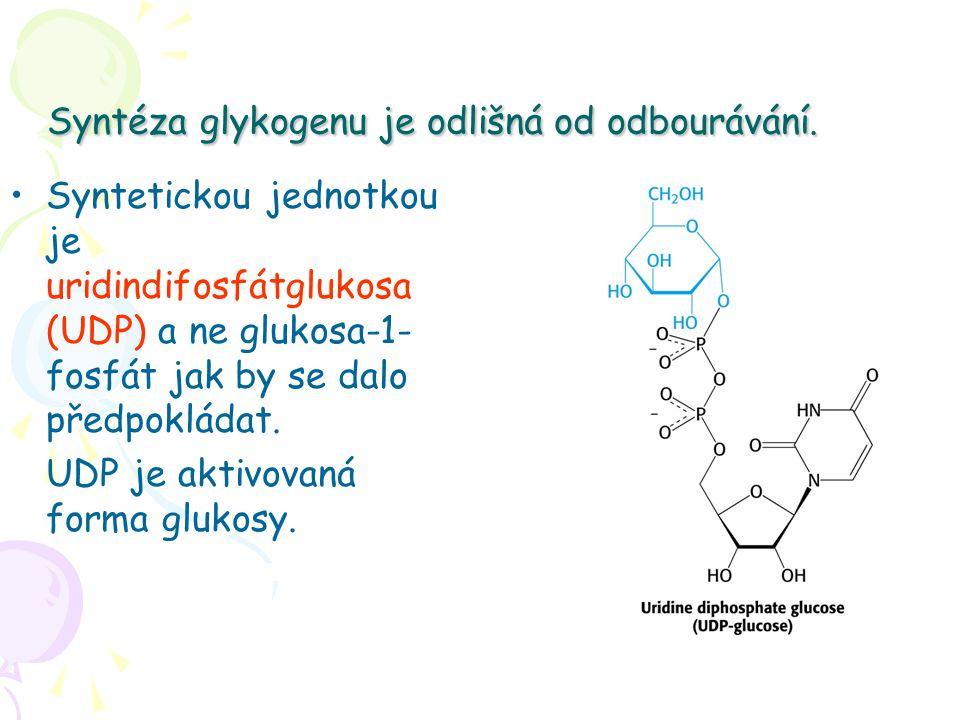 Syntéza glykogenu je odlišná od odbourávání.