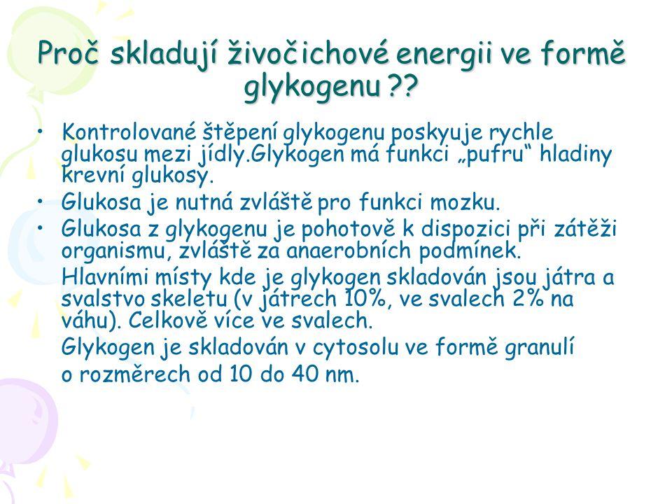 Proč skladují živočichové energii ve formě glykogenu