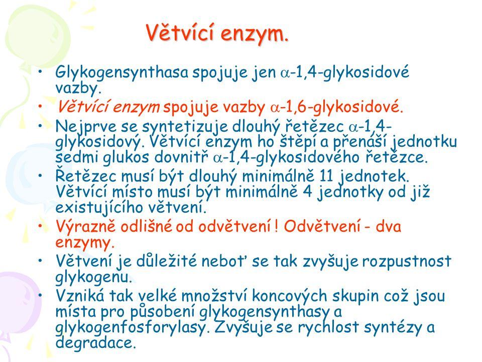 Větvící enzym. Glykogensynthasa spojuje jen a-1,4-glykosidové vazby.