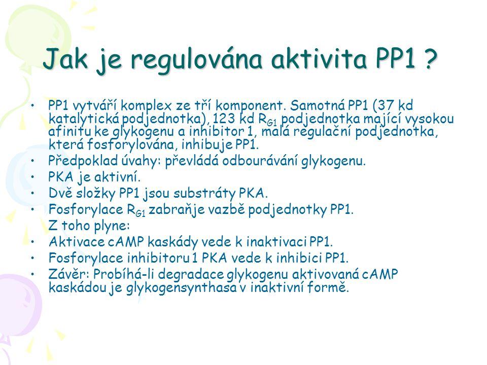 Jak je regulována aktivita PP1