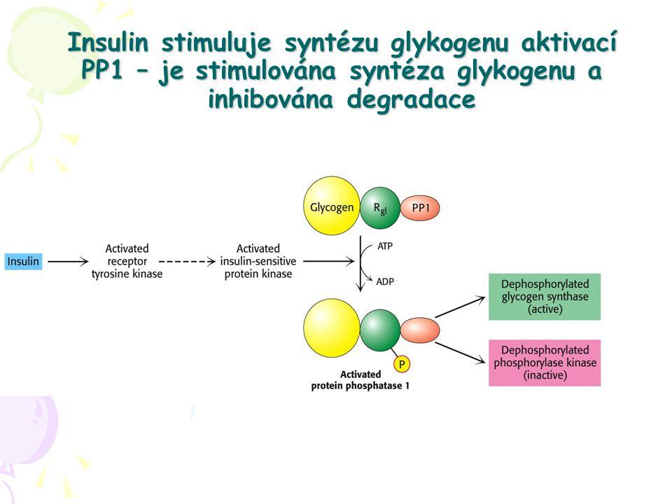 Insulin stimuluje syntézu glykogenu aktivací PP1 – je stimulována syntéza glykogenu a inhibována degradace
