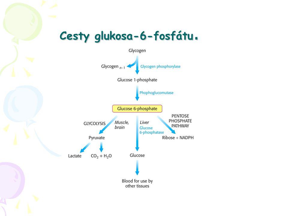 Cesty glukosa-6-fosfátu.
