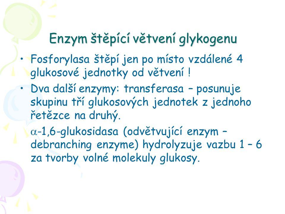 Enzym štěpící větvení glykogenu