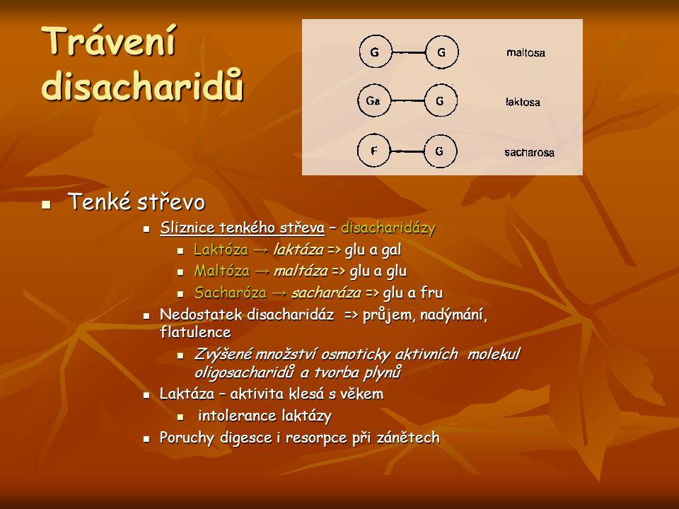 Trávení disacharidů Tenké střevo