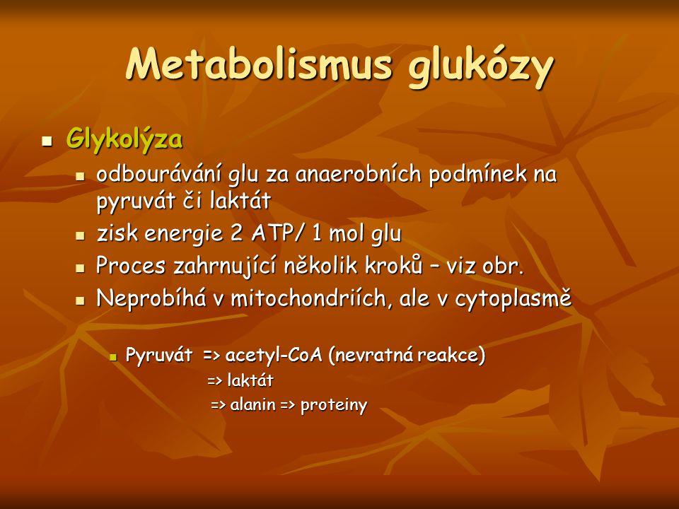 Metabolismus glukózy Glykolýza