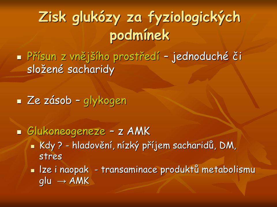 Zisk glukózy za fyziologických podmínek