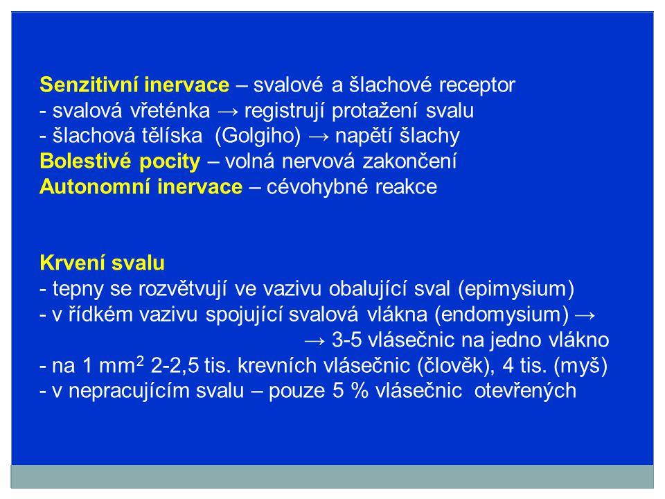 Senzitivní inervace – svalové a šlachové receptor