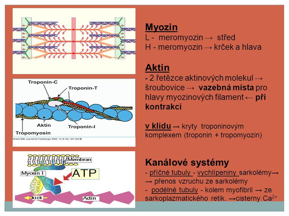 Myozin Aktin Kanálové systémy L - meromyozin → střed