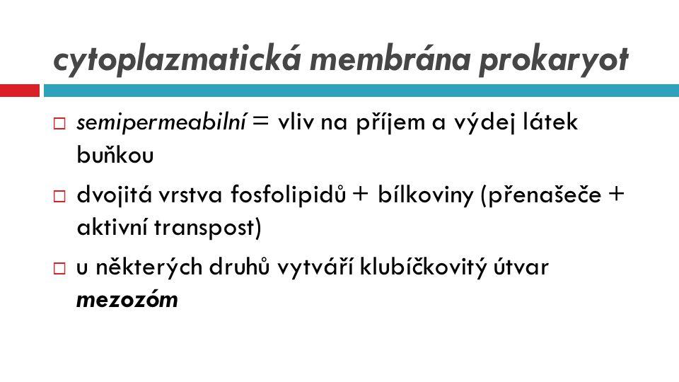 cytoplazmatická membrána prokaryot