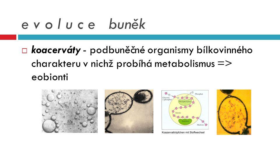 e v o l u c e buněk koacerváty - podbuněčné organismy bílkovinného charakteru v nichž probíhá metabolismus => eobionti.