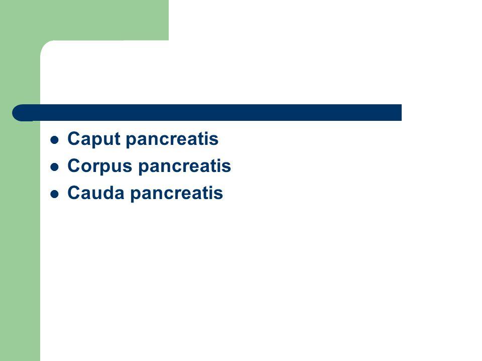Caput pancreatis Corpus pancreatis Cauda pancreatis