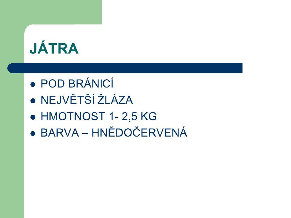 JÁTRA POD BRÁNICÍ NEJVĚTŠÍ ŽLÁZA HMOTNOST 1- 2,5 KG