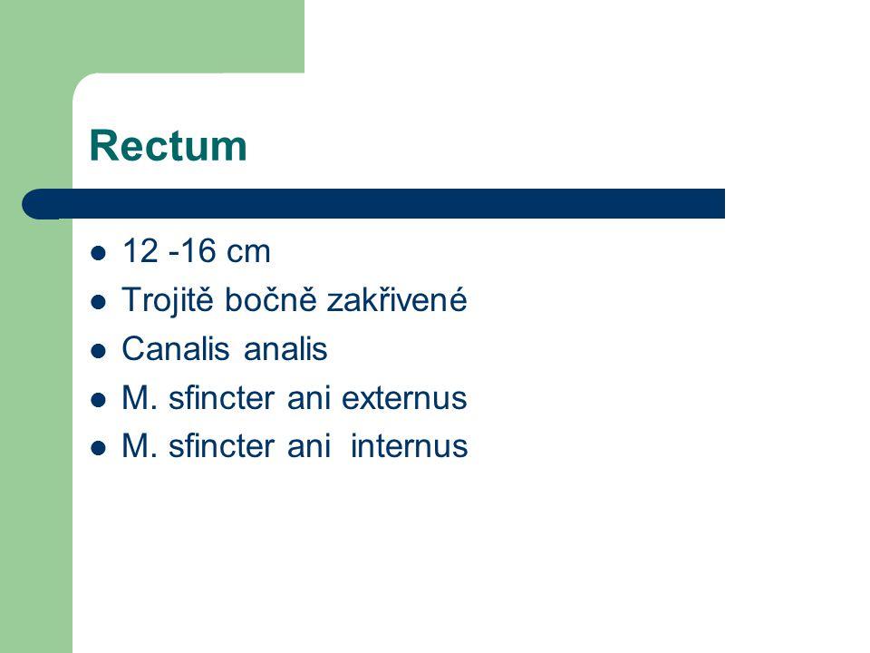 Rectum 12 -16 cm Trojitě bočně zakřivené Canalis analis
