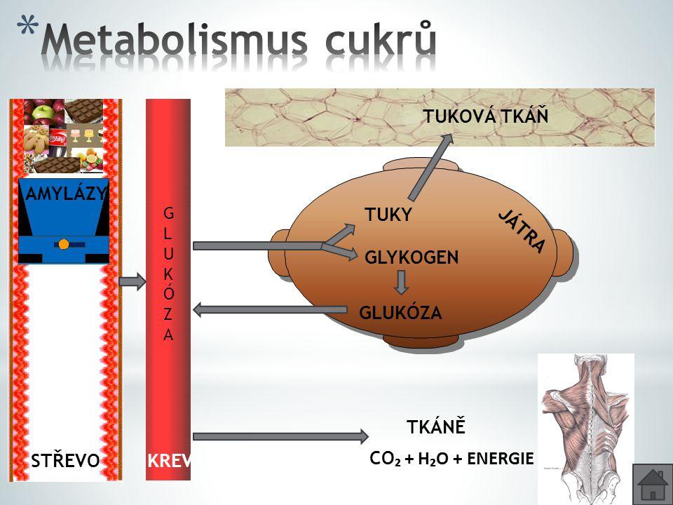 Metabolismus cukrů TUKOVÁ TKÁŇ AMYLÁZY TUKY JÁTRA GLYKOGEN GLUKÓZA