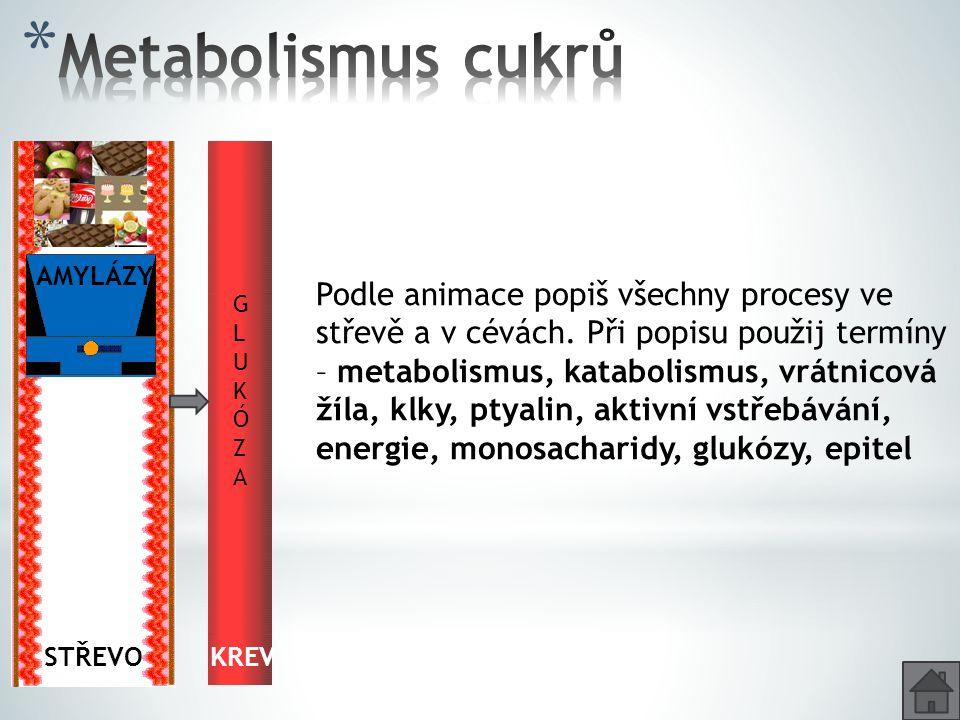Metabolismus cukrů AMYLÁZY. G. G.