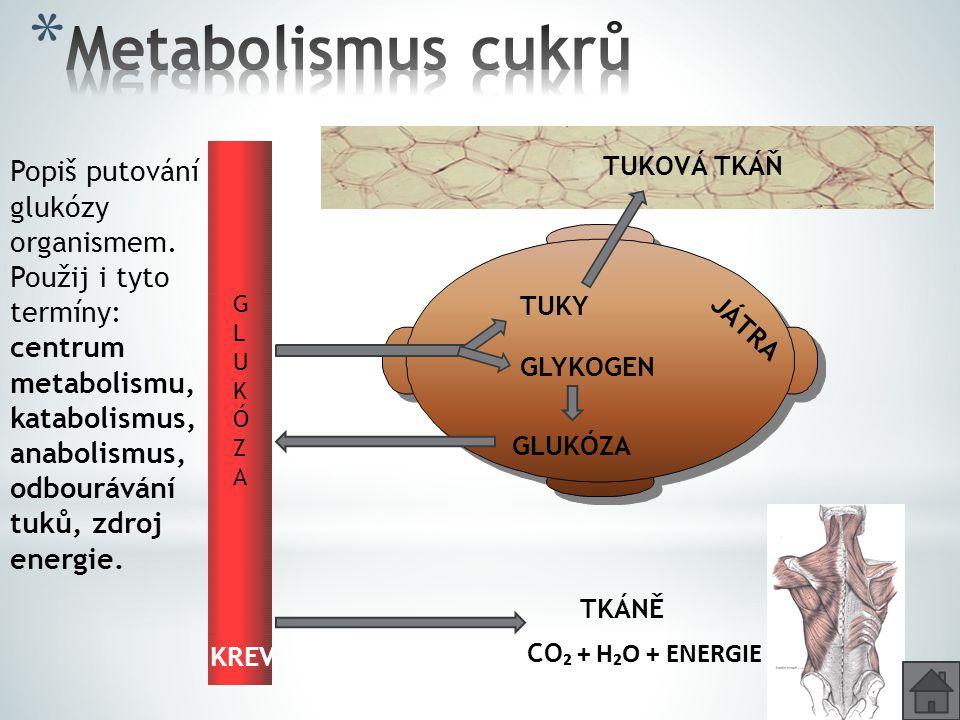 Metabolismus cukrů Popiš putování glukózy organismem.