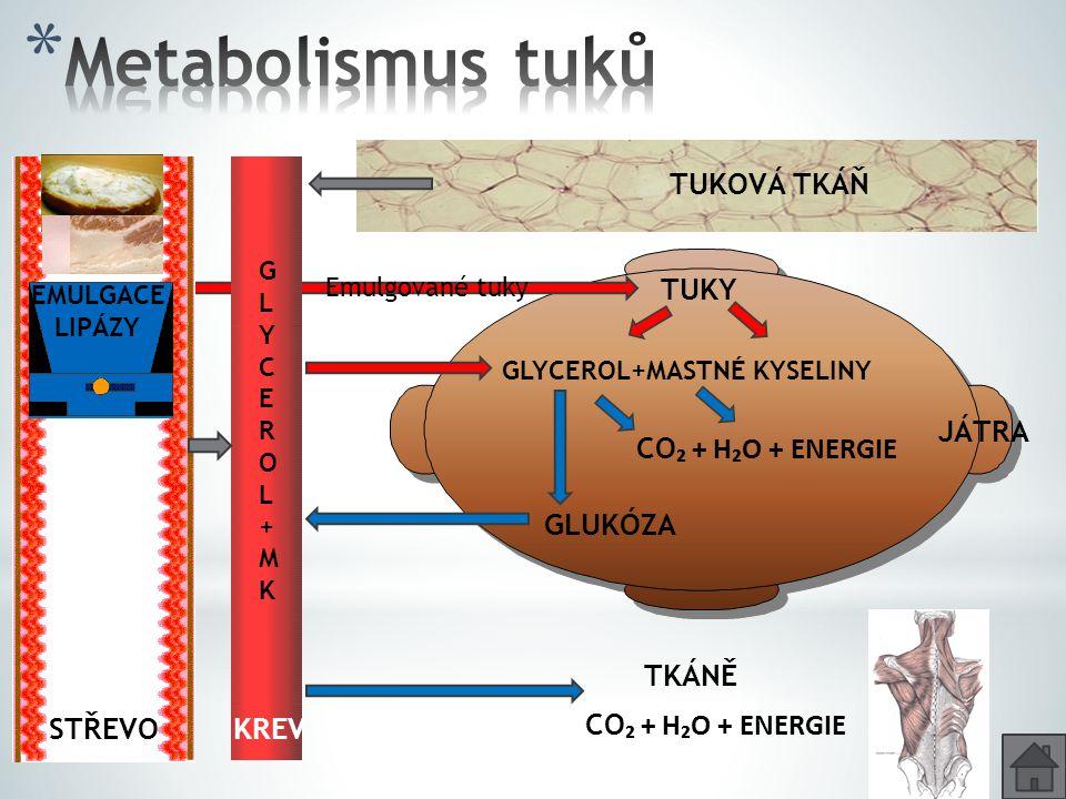 Metabolismus tuků TUKOVÁ TKÁŇ TUKY JÁTRA CO₂ + H₂O + ENERGIE GLUKÓZA