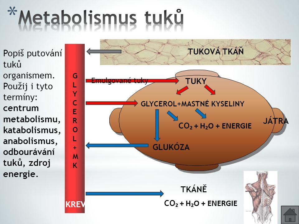 Metabolismus tuků Popiš putování tuků organismem.