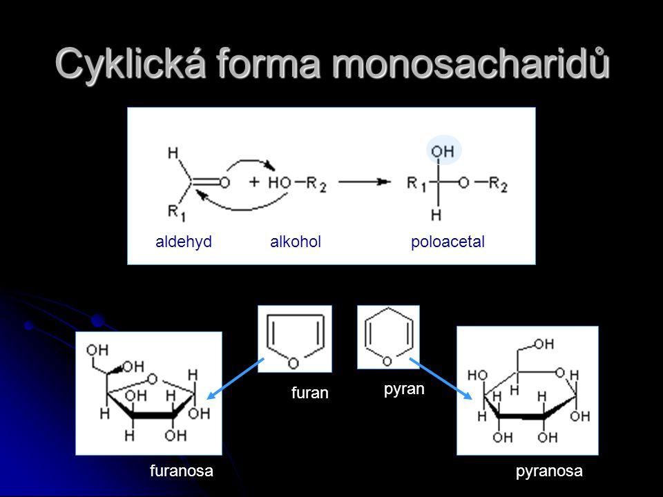 Cyklická forma monosacharidů