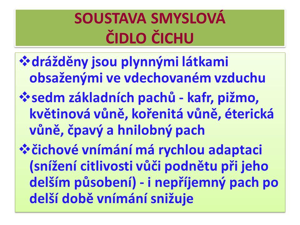 SOUSTAVA SMYSLOVÁ ČIDLO ČICHU