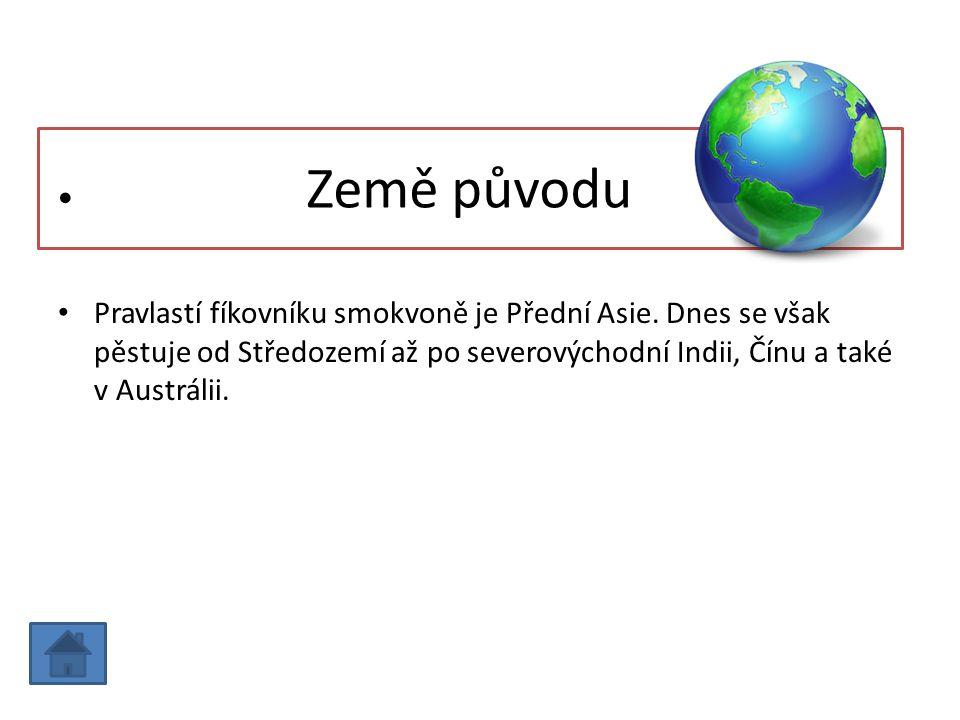 Země původu Pravlastí fíkovníku smokvoně je Přední Asie.