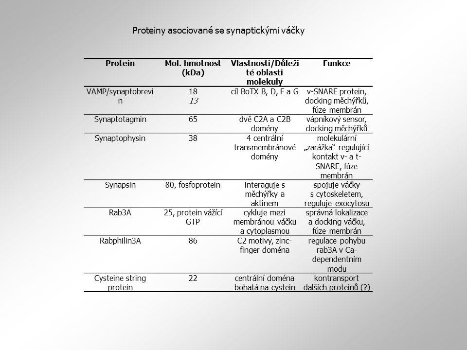 Vlastnosti/Důležité oblasti molekuly