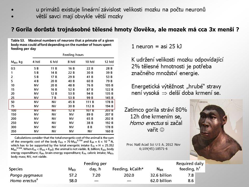 • větší savci mají obvykle větší mozky