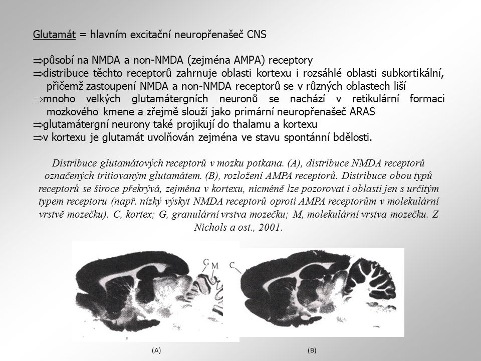 Glutamát = hlavním excitační neuropřenašeč CNS