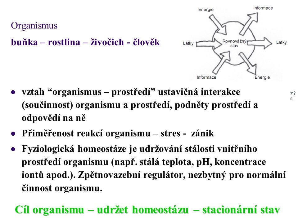 Organismus buňka – rostlina – živočich - člověk