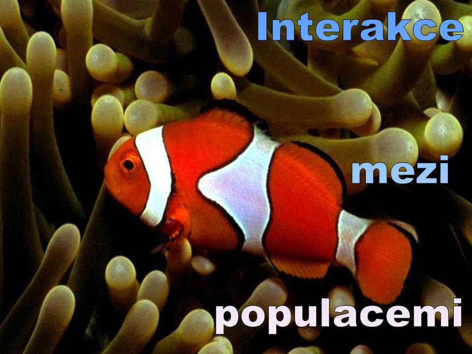 Interakce mezi populacemi