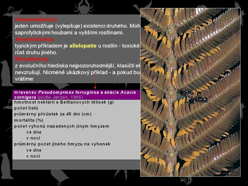 Komenzalismus jeden umožňuje (vylepšuje) existenci druhého. Mohl by sem patřit např. vztah mezi saprofytickými houbami a vyššími rostlinami.