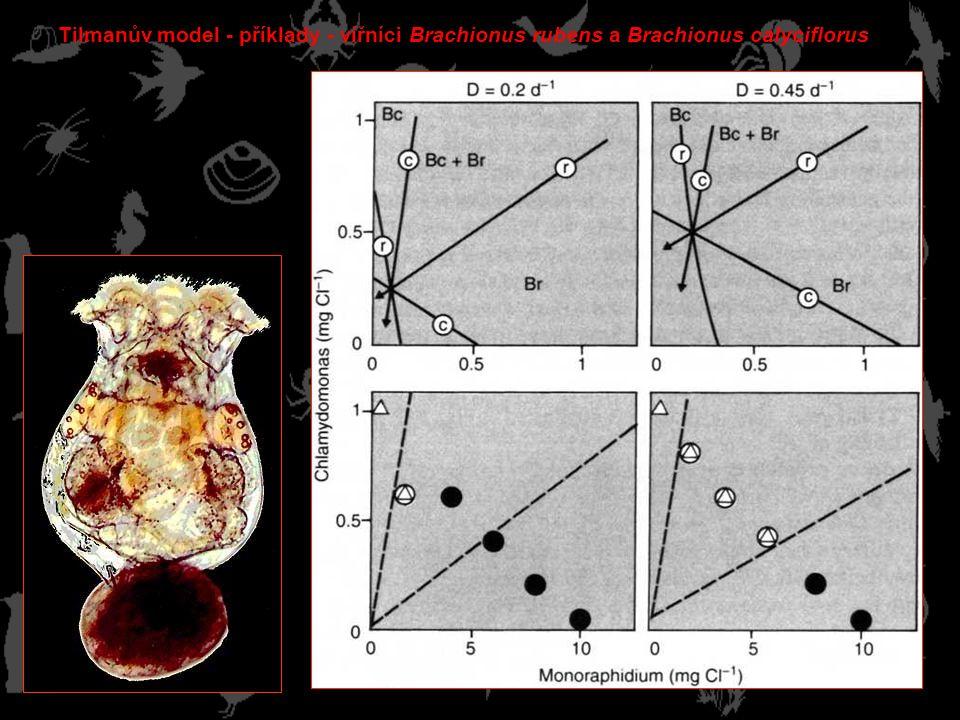 Tilmanův model - příklady - vířníci Brachionus rubens a Brachionus calyciflorus