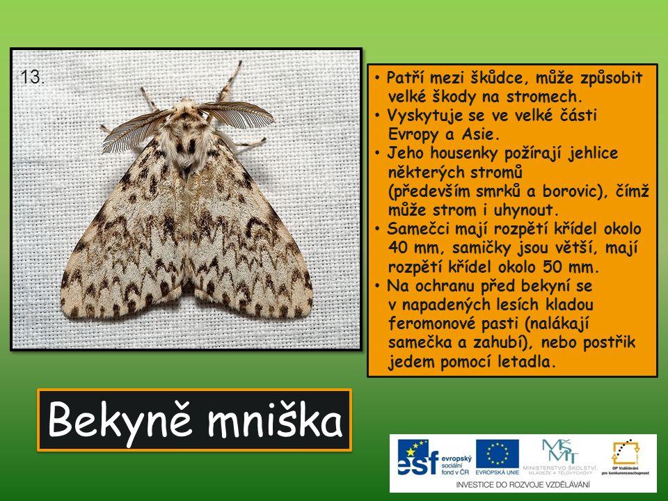 13. Patří mezi škůdce, může způsobit velké škody na stromech. Vyskytuje se ve velké části Evropy a Asie.