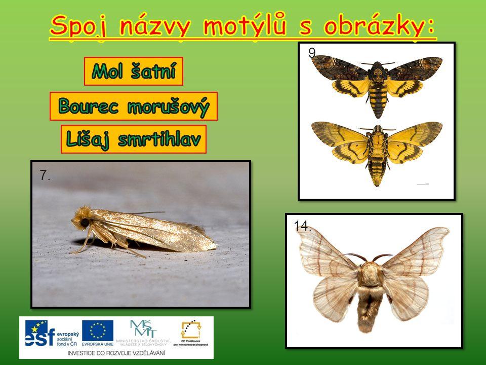 Spoj názvy motýlů s obrázky: